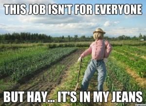 Scarecrow-meme-550x401