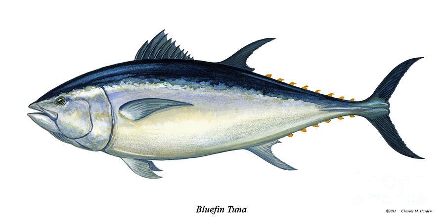 Something smells fishy for Tuna fish price