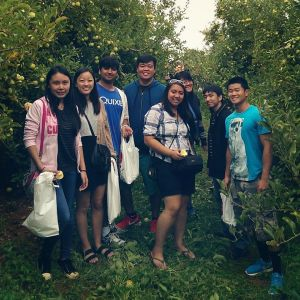 apples picking with aiv!