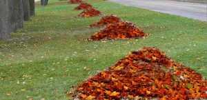 fall-leaves-yard-cleanup-4