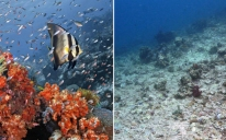 Coral reef before and after coral bleaching. Image via Through the Sand Glass