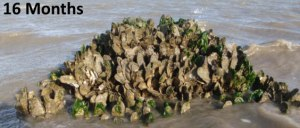oystercastle16