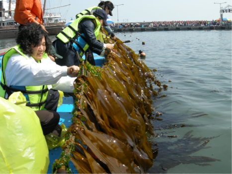 seaweed3
